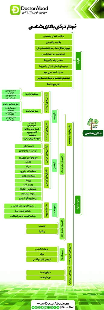 نمودار درختی باکتریشناسی