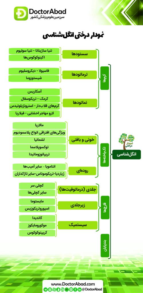 نمودار درختی انگل شناسی