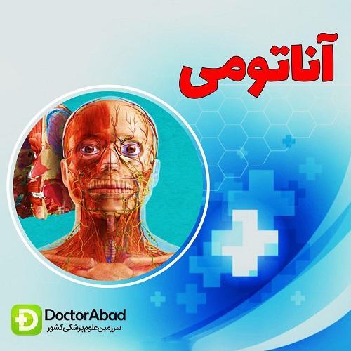 پیشگفتار آناتومی